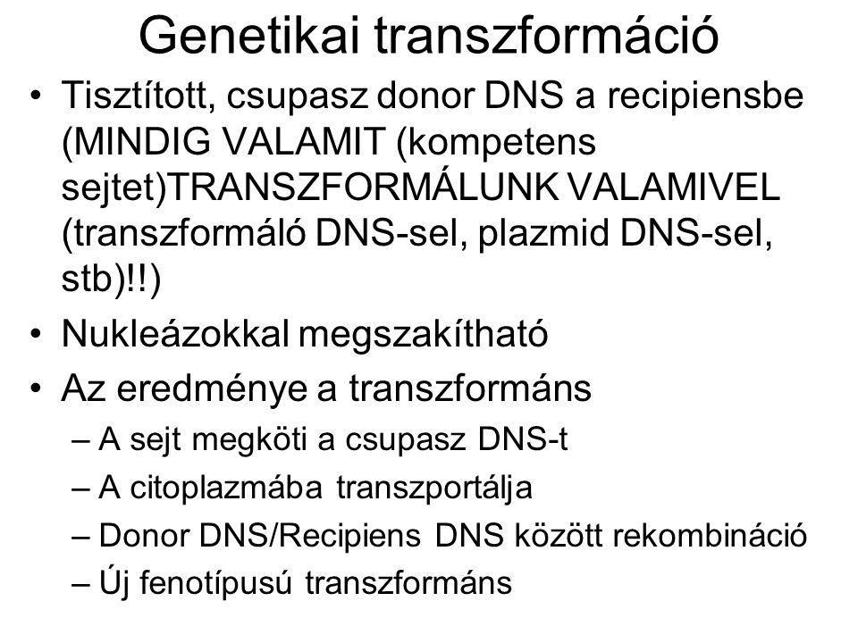 Genetikai transzformáció Tisztított, csupasz donor DNS a recipiensbe (MINDIG VALAMIT (kompetens sejtet)TRANSZFORMÁLUNK VALAMIVEL (transzformáló DNS-se