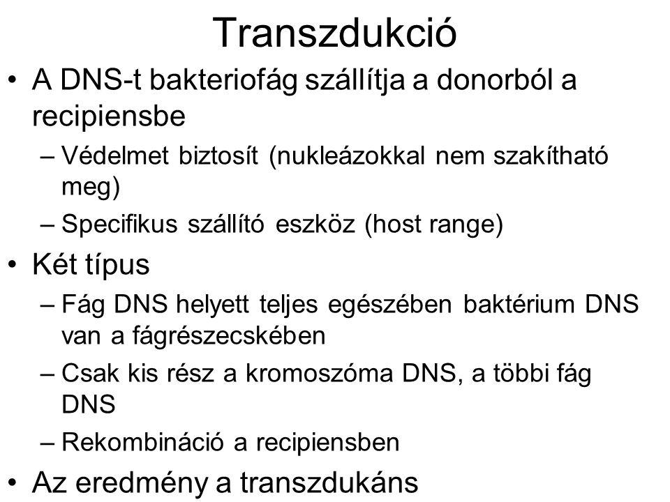 Transzdukció A DNS-t bakteriofág szállítja a donorból a recipiensbe –Védelmet biztosít (nukleázokkal nem szakítható meg) –Specifikus szállító eszköz (