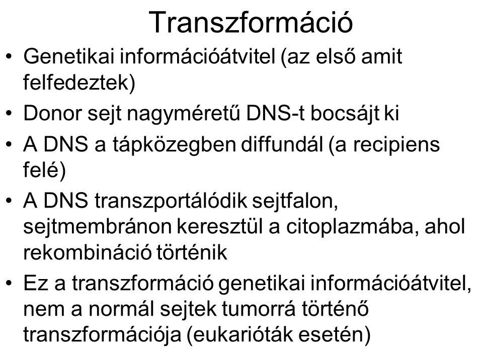 Transzformáció Genetikai információátvitel (az első amit felfedeztek) Donor sejt nagyméretű DNS-t bocsájt ki A DNS a tápközegben diffundál (a recipien