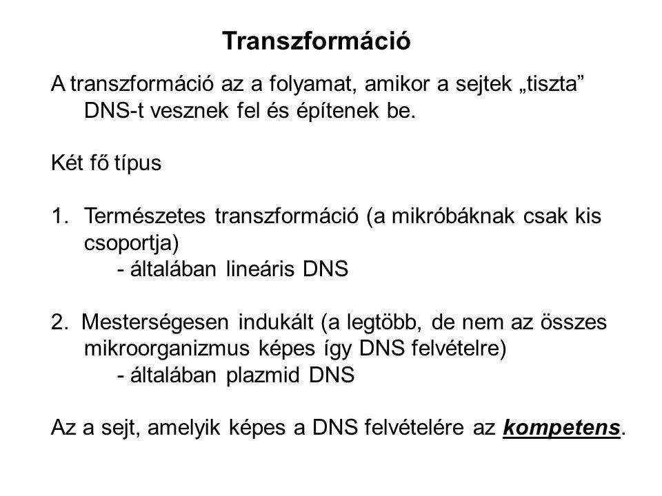 """Transzformáció A transzformáció az a folyamat, amikor a sejtek """"tiszta"""" DNS-t vesznek fel és építenek be. Két fő típus 1.Természetes transzformáció (a"""