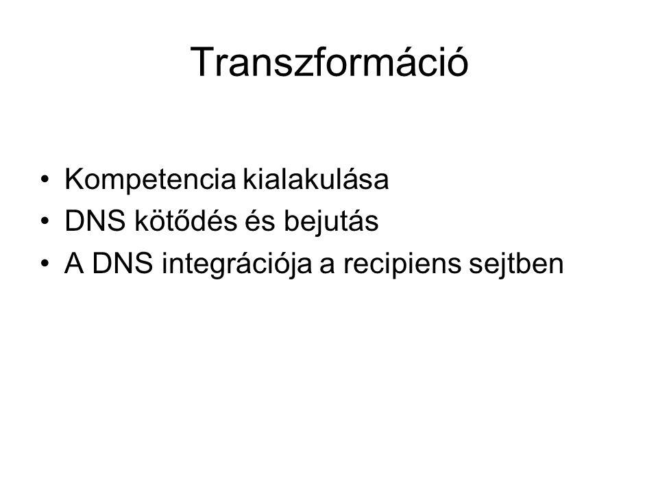 Kompetencia kialakulása DNS kötődés és bejutás A DNS integrációja a recipiens sejtben Transzformáció