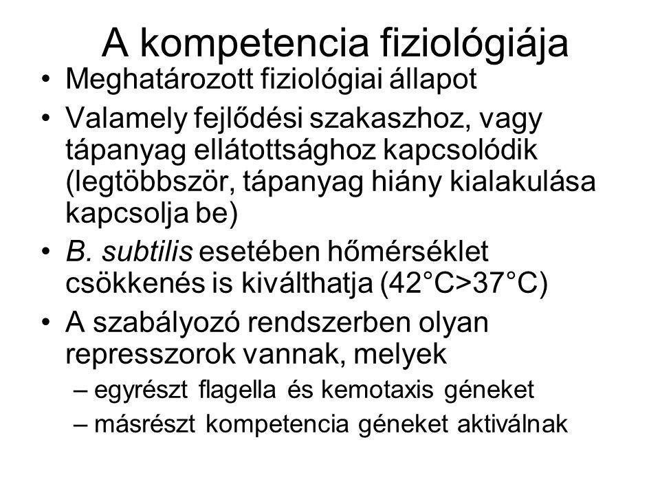 A kompetencia fiziológiája Meghatározott fiziológiai állapot Valamely fejlődési szakaszhoz, vagy tápanyag ellátottsághoz kapcsolódik (legtöbbször, táp