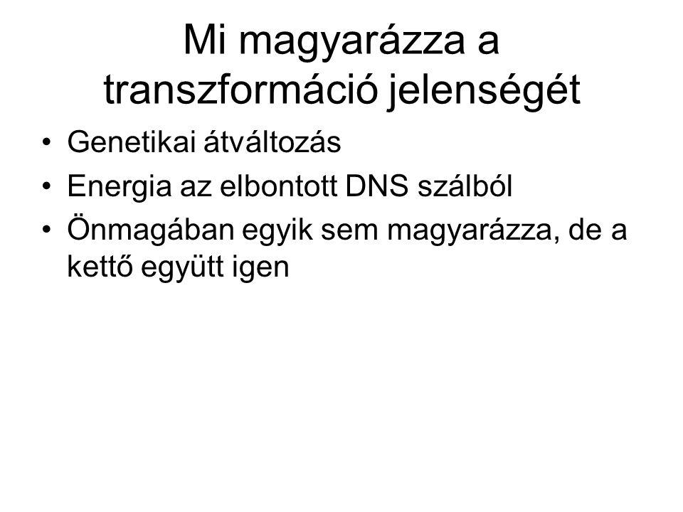 Mi magyarázza a transzformáció jelenségét Genetikai átváltozás Energia az elbontott DNS szálból Önmagában egyik sem magyarázza, de a kettő együtt igen