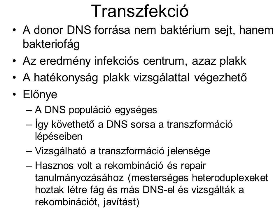 Transzfekció A donor DNS forrása nem baktérium sejt, hanem bakteriofág Az eredmény infekciós centrum, azaz plakk A hatékonyság plakk vizsgálattal vége