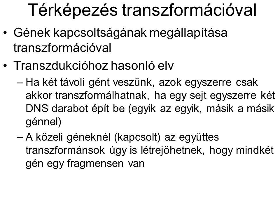 Térképezés transzformációval Gének kapcsoltságának megállapítása transzformációval Transzdukcióhoz hasonló elv –Ha két távoli gént veszünk, azok egysz