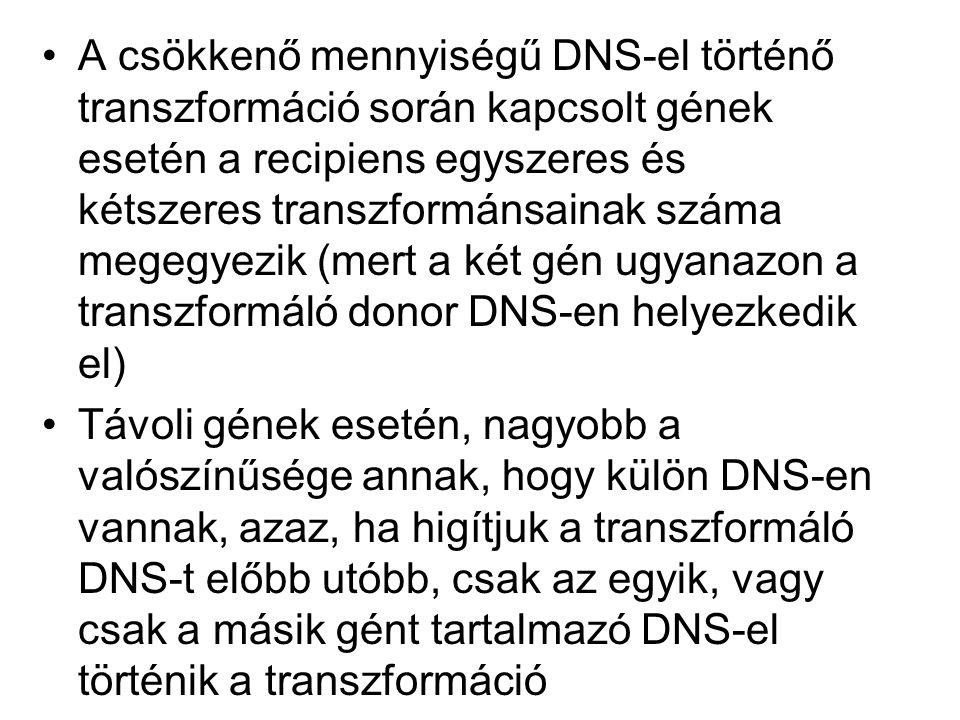 A csökkenő mennyiségű DNS-el történő transzformáció során kapcsolt gének esetén a recipiens egyszeres és kétszeres transzformánsainak száma megegyezik