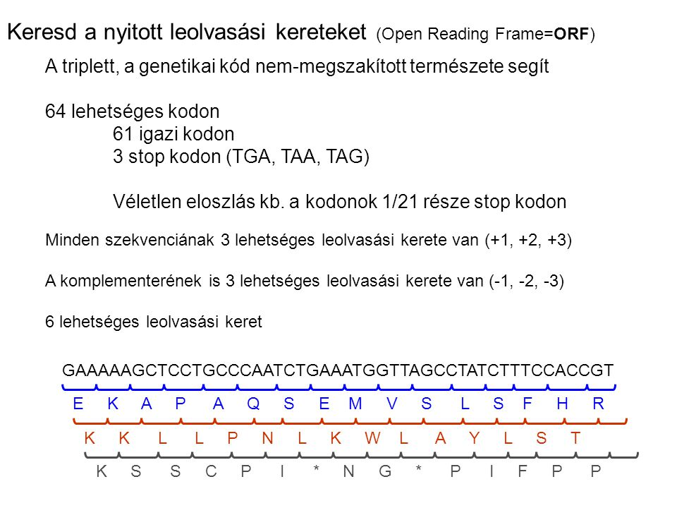 Keresd a nyitott leolvasási kereteket (Open Reading Frame=ORF) GAAAAAGCTCCTGCCCAATCTGAAATGGTTAGCCTATCTTTCCACCGT Minden szekvenciának 3 lehetséges leol