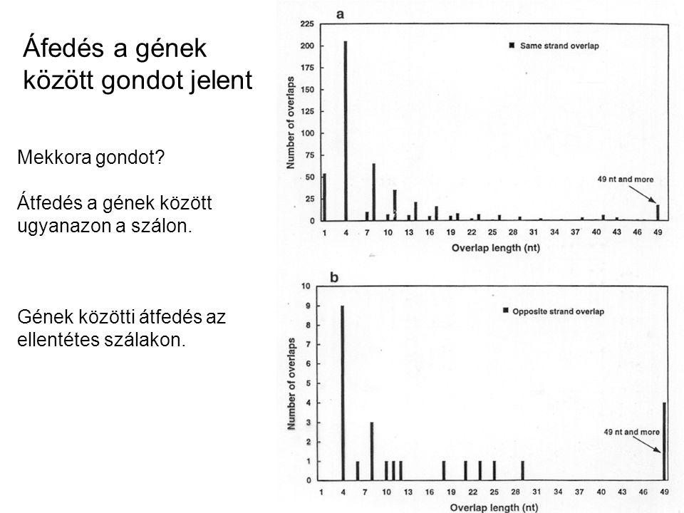 Áfedés a gének között gondot jelent Mekkora gondot? Átfedés a gének között ugyanazon a szálon. Gének közötti átfedés az ellentétes szálakon.
