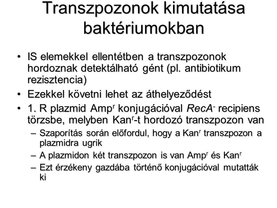 Transzpozonok kimutatása baktériumokban IS elemekkel ellentétben a transzpozonok hordoznak detektálható gént (pl. antibiotikum rezisztencia)IS elemekk