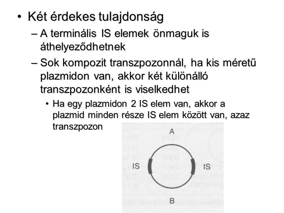 Két érdekes tulajdonságKét érdekes tulajdonság –A terminális IS elemek önmaguk is áthelyeződhetnek –Sok kompozit transzpozonnál, ha kis méretű plazmidon van, akkor két különálló transzpozonként is viselkedhet Ha egy plazmidon 2 IS elem van, akkor a plazmid minden része IS elem között van, azaz transzpozonHa egy plazmidon 2 IS elem van, akkor a plazmid minden része IS elem között van, azaz transzpozon