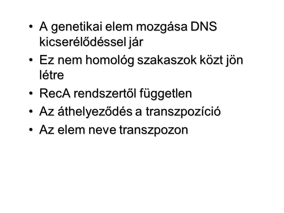 A genetikai elem mozgása DNS kicserélődéssel járA genetikai elem mozgása DNS kicserélődéssel jár Ez nem homológ szakaszok közt jön létreEz nem homológ szakaszok közt jön létre RecA rendszertől függetlenRecA rendszertől független Az áthelyeződés a transzpozícióAz áthelyeződés a transzpozíció Az elem neve transzpozonAz elem neve transzpozon
