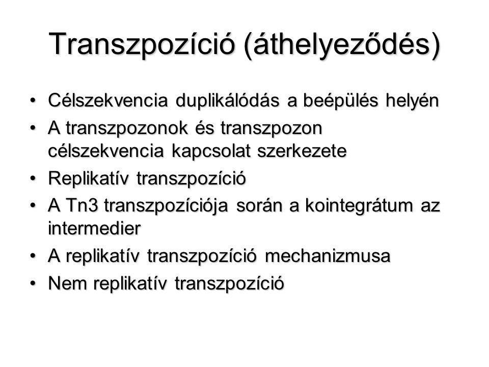 Transzpozíció (áthelyeződés) Célszekvencia duplikálódás a beépülés helyénCélszekvencia duplikálódás a beépülés helyén A transzpozonok és transzpozon c