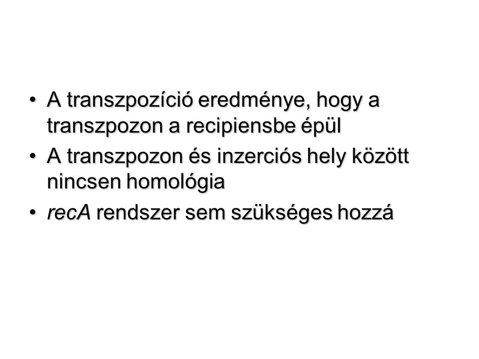 A transzpozíció eredménye, hogy a transzpozon a recipiensbe épülA transzpozíció eredménye, hogy a transzpozon a recipiensbe épül A transzpozon és inzerciós hely között nincsen homológiaA transzpozon és inzerciós hely között nincsen homológia recA rendszer sem szükséges hozzárecA rendszer sem szükséges hozzá