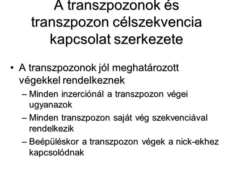 A transzpozonok és transzpozon célszekvencia kapcsolat szerkezete A transzpozonok jól meghatározott végekkel rendelkeznekA transzpozonok jól meghatározott végekkel rendelkeznek –Minden inzerciónál a transzpozon végei ugyanazok –Minden transzpozon saját vég szekvenciával rendelkezik –Beépüléskor a transzpozon végek a nick-ekhez kapcsolódnak