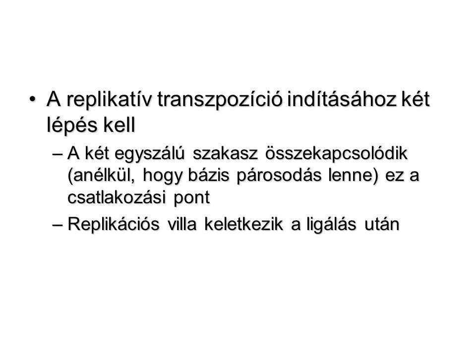 A replikatív transzpozíció indításához két lépés kellA replikatív transzpozíció indításához két lépés kell –A két egyszálú szakasz összekapcsolódik (anélkül, hogy bázis párosodás lenne) ez a csatlakozási pont –Replikációs villa keletkezik a ligálás után
