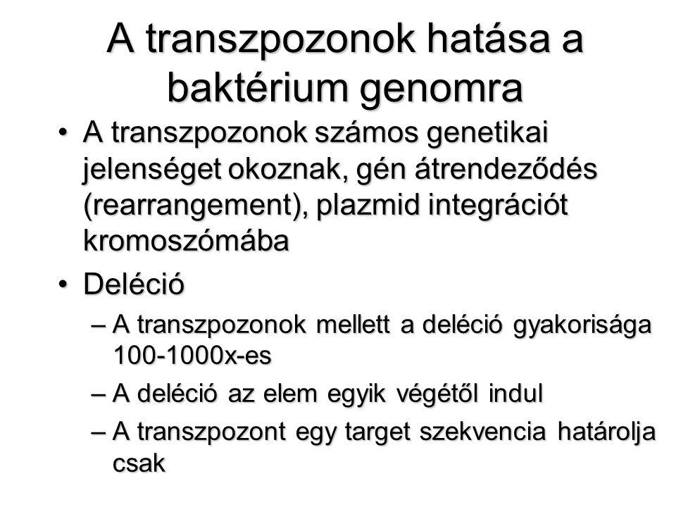 A transzpozonok hatása a baktérium genomra A transzpozonok számos genetikai jelenséget okoznak, gén átrendeződés (rearrangement), plazmid integrációt kromoszómábaA transzpozonok számos genetikai jelenséget okoznak, gén átrendeződés (rearrangement), plazmid integrációt kromoszómába DelécióDeléció –A transzpozonok mellett a deléció gyakorisága 100-1000x-es –A deléció az elem egyik végétől indul –A transzpozont egy target szekvencia határolja csak