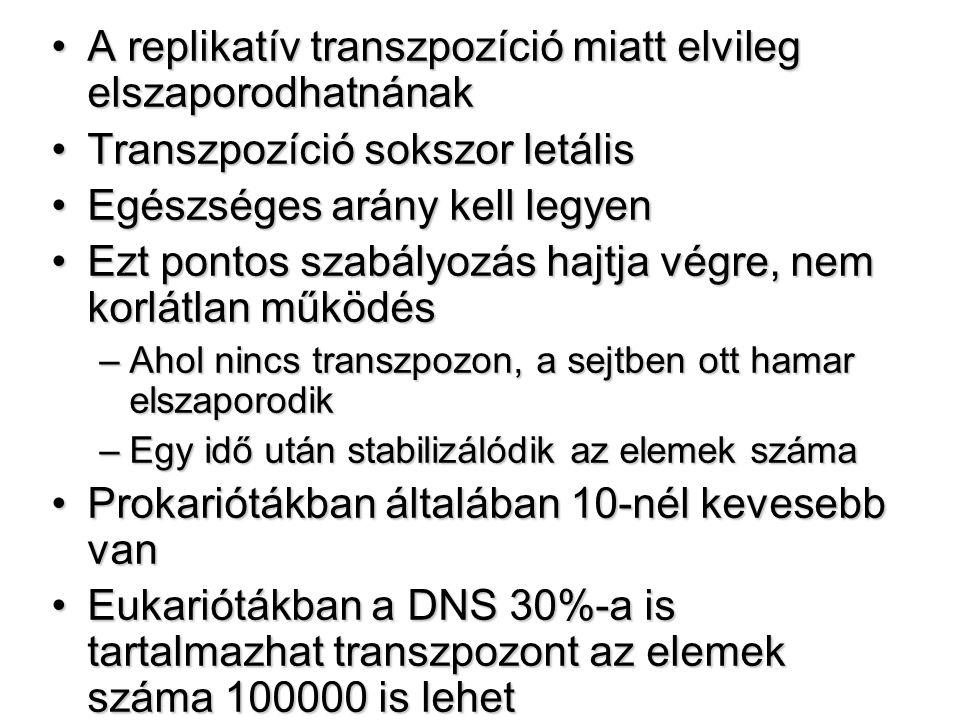 A replikatív transzpozíció miatt elvileg elszaporodhatnánakA replikatív transzpozíció miatt elvileg elszaporodhatnának Transzpozíció sokszor letálisTranszpozíció sokszor letális Egészséges arány kell legyenEgészséges arány kell legyen Ezt pontos szabályozás hajtja végre, nem korlátlan működésEzt pontos szabályozás hajtja végre, nem korlátlan működés –Ahol nincs transzpozon, a sejtben ott hamar elszaporodik –Egy idő után stabilizálódik az elemek száma Prokariótákban általában 10-nél kevesebb vanProkariótákban általában 10-nél kevesebb van Eukariótákban a DNS 30%-a is tartalmazhat transzpozont az elemek száma 100000 is lehetEukariótákban a DNS 30%-a is tartalmazhat transzpozont az elemek száma 100000 is lehet