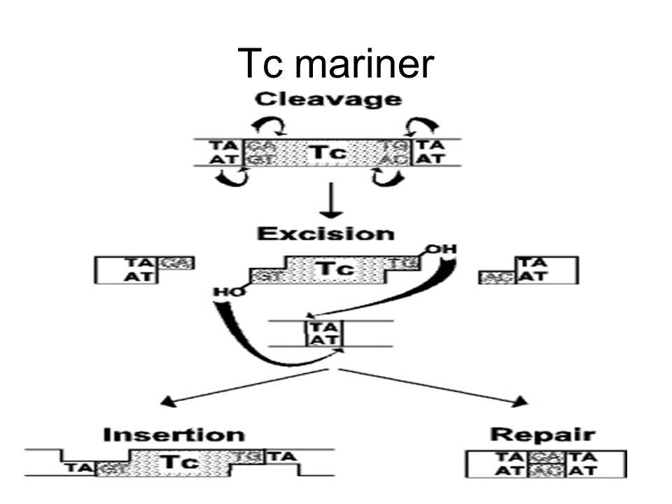Tc mariner