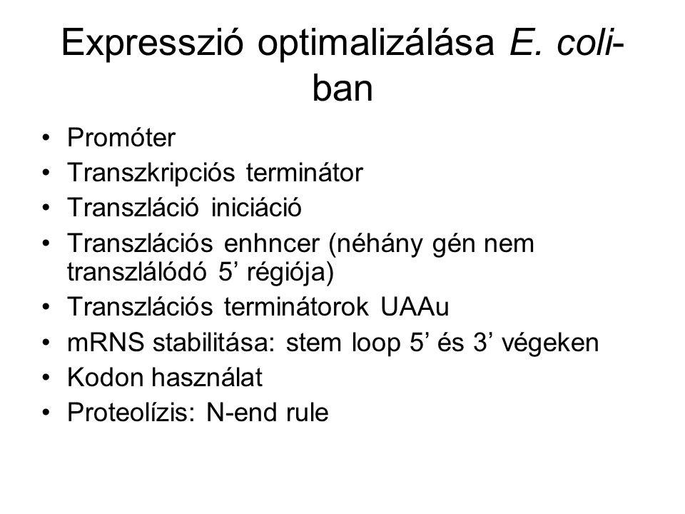 Expresszió optimalizálása E.