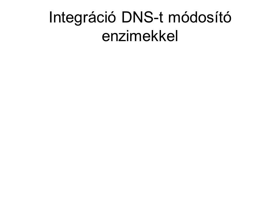 Integráció DNS-t módosító enzimekkel