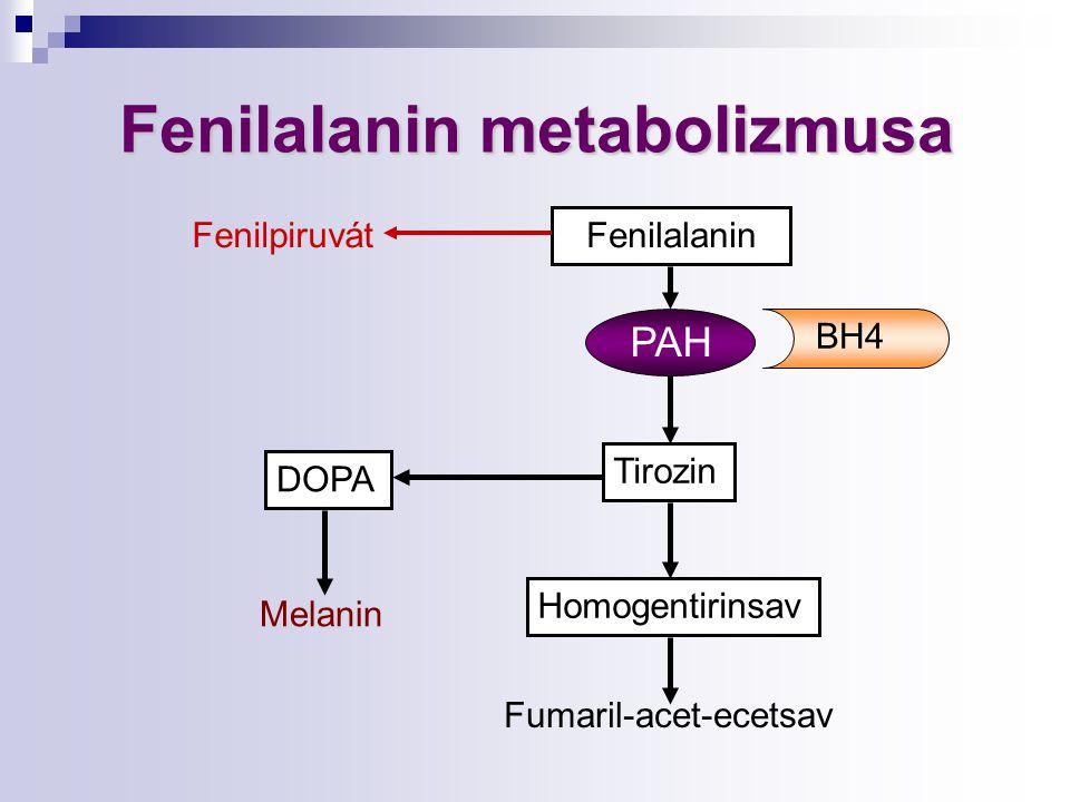 Fenilalanin Tirozin Homogentirinsav DOPA Fenilalaninmetabolizmusa Fenilalanin metabolizmusa PAH Melanin Fumaril-acet-ecetsav BH4 Fenilpiruvát
