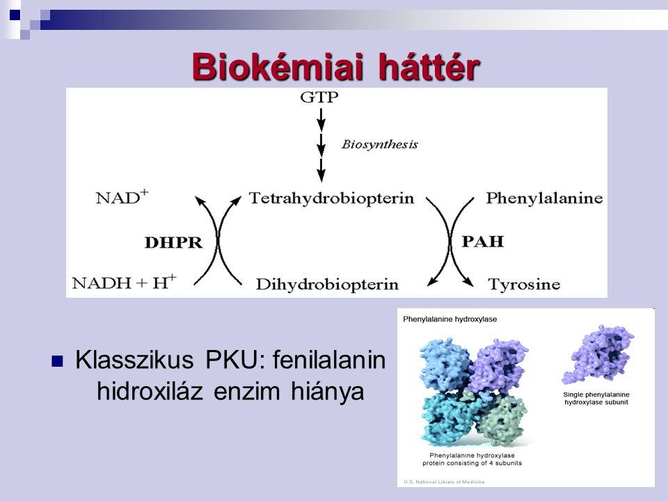 Biokémiai háttér Klasszikus PKU: fenilalanin hidroxiláz enzim hiánya