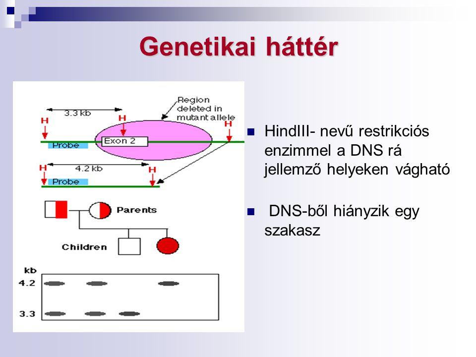 Genetikai háttér HindIII- nevű restrikciós enzimmel a DNS rá jellemző helyeken vágható DNS-ből hiányzik egy szakasz