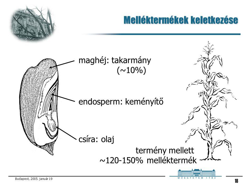Budapest, 2005. január 19 18 Melléktermékek keletkezése maghéj: takarmány (~10%) endosperm: keményítő csíra: olaj termény mellett ~120-150% mellékterm
