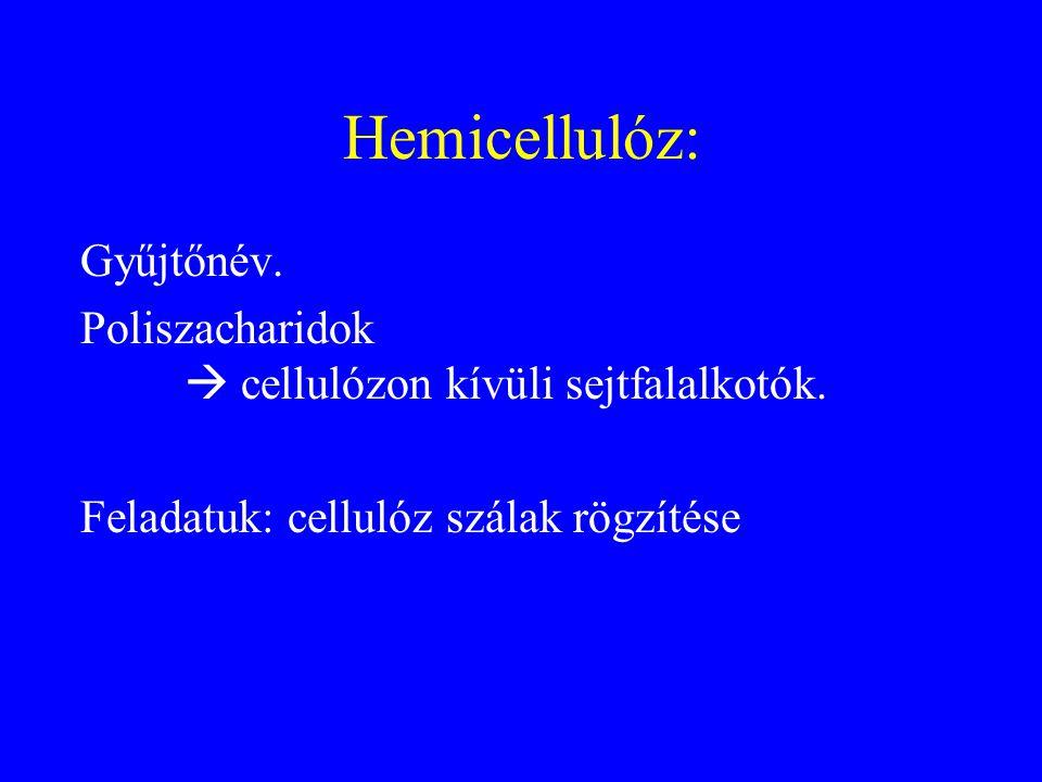 Hemicellulóz: Gyűjtőnév. Poliszacharidok  cellulózon kívüli sejtfalalkotók. Feladatuk: cellulóz szálak rögzítése