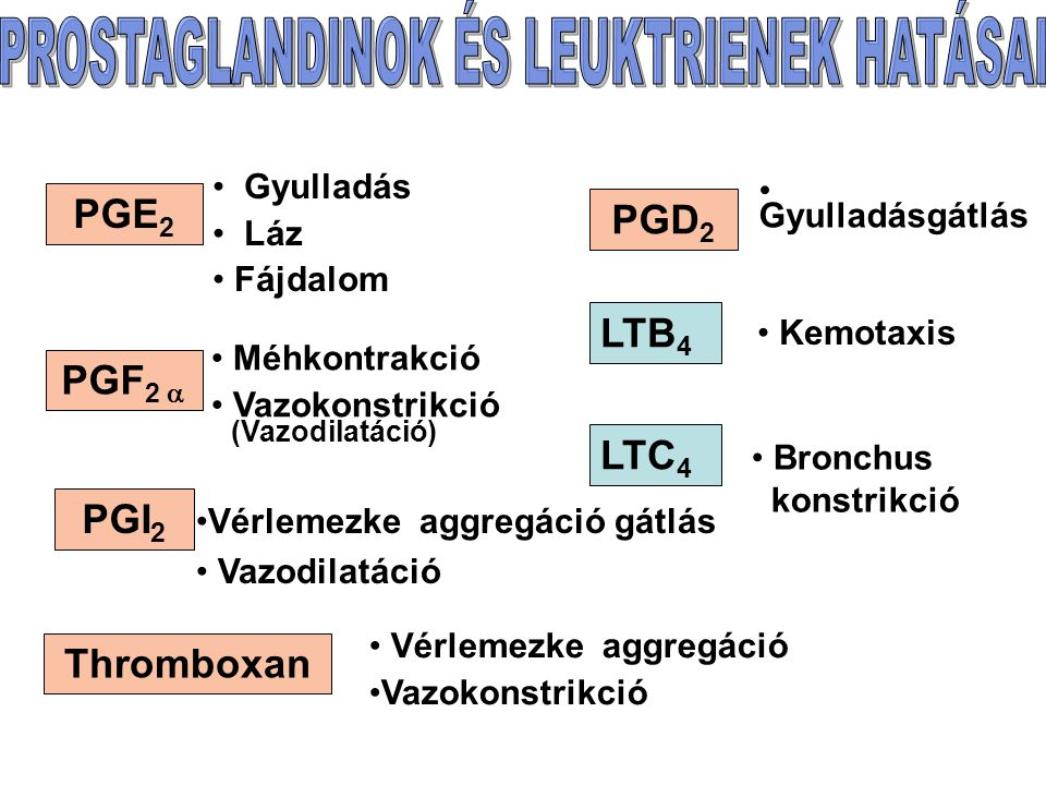 PGE 2 PGF 2  PGI 2 Gyulladás Láz Fájdalom Méhkontrakció Vazokonstrikció (Vazodilatáció) Vérlemezke aggregáció gátlás Vazodilatáció PGD 2 Thromboxan Vérlemezke aggregáció Vazokonstrikció LTB 4 LTC 4 Kemotaxis Bronchus konstrikció Gyulladásgátlás