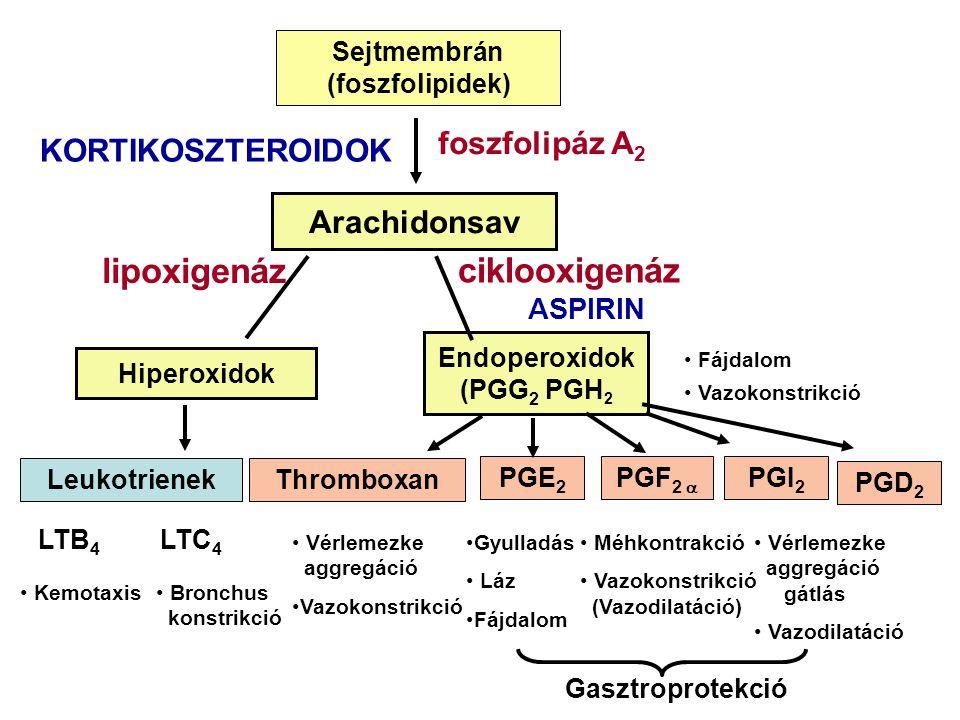 Sejtmembrán (foszfolipidek) Arachidonsav Hiperoxidok Endoperoxidok (PGG 2 PGH 2 LeukotrienekThromboxan PGE 2 PGF 2  PGI 2 KORTIKOSZTEROIDOK foszfolipáz A 2 ciklooxigenáz ASPIRIN LTB 4 LTC 4 Kemotaxis Bronchus konstrikció Vérlemezke aggregáció Vazokonstrikció Gyulladás Láz Fájdalom Méhkontrakció Vazokonstrikció (Vazodilatáció) Vérlemezke aggregáció gátlás Vazodilatáció Fájdalom Vazokonstrikció Gasztroprotekció lipoxigenáz PGD 2
