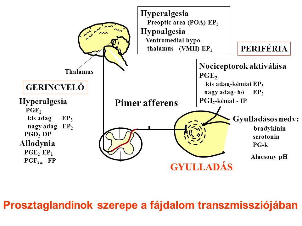 Nociceptorok aktiválása PGE 2 kis adag-kémiai EP 3 nagy adag- hő EP 2 PGI 2 -kémal - IP GERINCVELŐ Hyperalgesia Preoptic area (POA)-EP 3 Hypoalgesia Ventromedial hypo- thalamus (VMH)-EP 1 PERIFÉRIA Hyperalgesia PGE 2 kis adag - EP 3 nagy adag - EP 2 PGD 2 -DP Allodynia PGE 2 -EP 1 PGF 2  - FP Gyulladásos nedv: bradykinin serotonin PG-k Alacsony pH GYULLADÁS Pimer afferens Thalamus Prosztaglandinok szerepe a fájdalom transzmissziójában