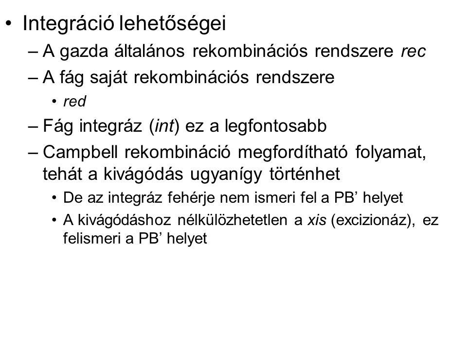 Integráció lehetőségei –A gazda általános rekombinációs rendszere rec –A fág saját rekombinációs rendszere red –Fág integráz (int) ez a legfontosabb –