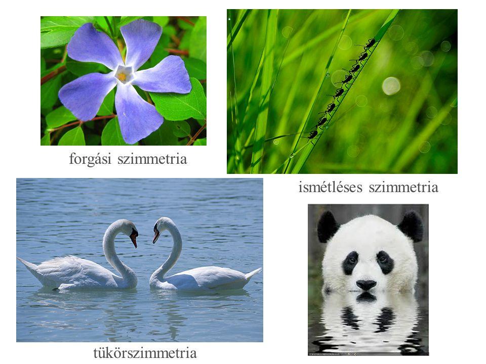 forgási szimmetria tükörszimmetria ismétléses szimmetria