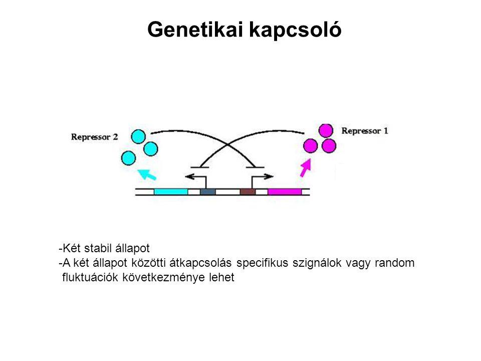Genetikai kapcsoló -Két stabil állapot -A két állapot közötti átkapcsolás specifikus szignálok vagy random fluktuációk következménye lehet