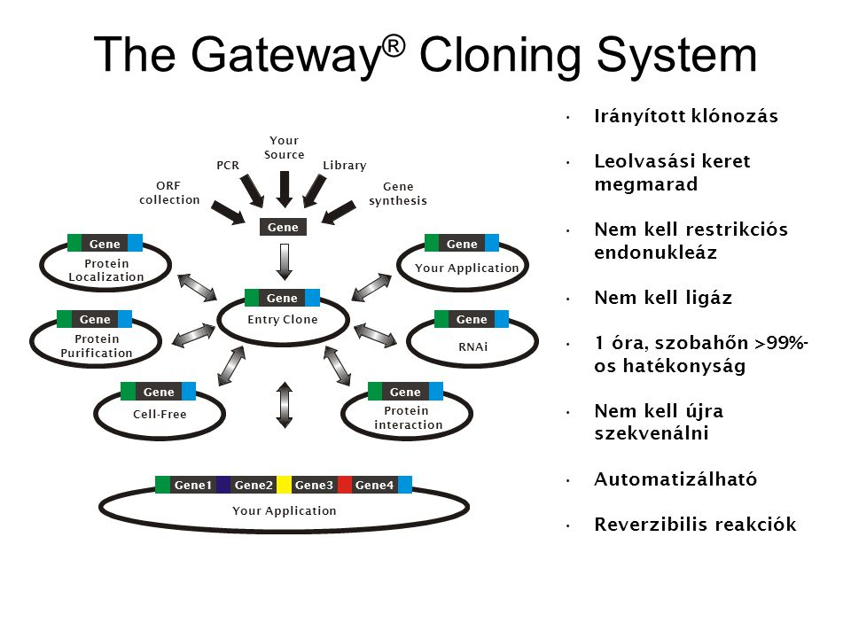 The Gateway ® Cloning System Your Application Gene1Gene2Gene3Gene4 Your Application Gene Protein Localization Gene Protein Purification Gene RNAi Gene Cell-Free Gene Protein interaction Gene Entry Clone PCR Gene synthesis ORF collection Library Your Source Irányított klónozás Leolvasási keret megmarad Nem kell restrikciós endonukleáz Nem kell ligáz 1 óra, szobah ő n >99%- os hatékonyság Nem kell újra szekvenálni Automatizálható Reverzibilis reakciók