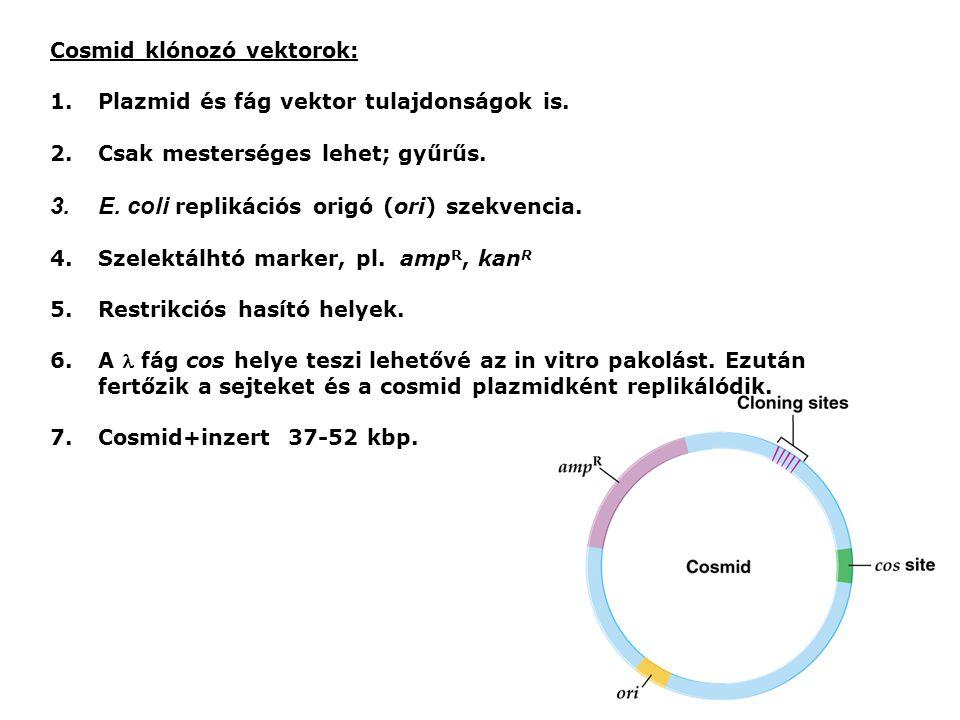 Cosmid klónozó vektorok: 1.Plazmid és fág vektor tulajdonságok is.