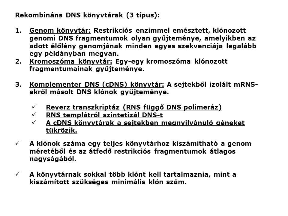 Rekombináns DNS könyvtárak (3 típus): 1.Genom könyvtár: Restrikciós enzimmel emésztett, klónozott genomi DNS fragmentumok olyan gyűjteménye, amelyikben az adott élőlény genomjának minden egyes szekvenciája legalább egy példányban megvan.