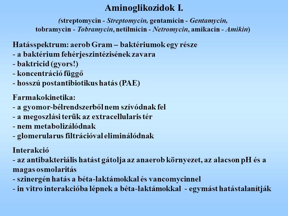 Aminoglikozidok I. Hatásspektrum: aerob Gram – baktériumok egy része - a baktérium fehérjeszintézisének zavara - baktricid (gyors!) - koncentráció füg