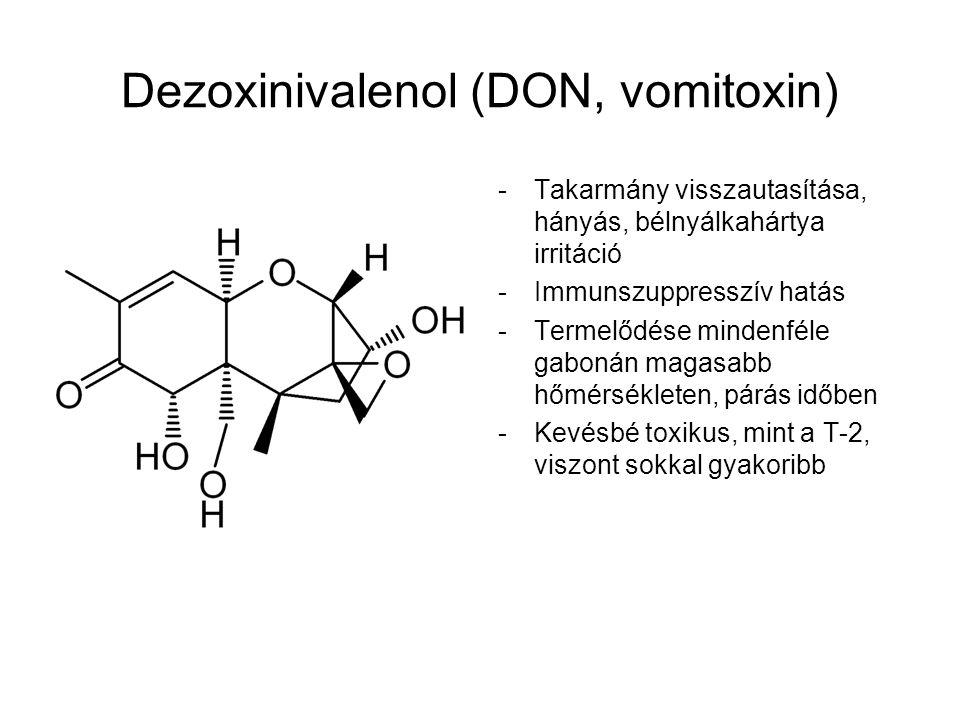 Dezoxinivalenol (DON, vomitoxin) -Takarmány visszautasítása, hányás, bélnyálkahártya irritáció -Immunszuppresszív hatás -Termelődése mindenféle gaboná