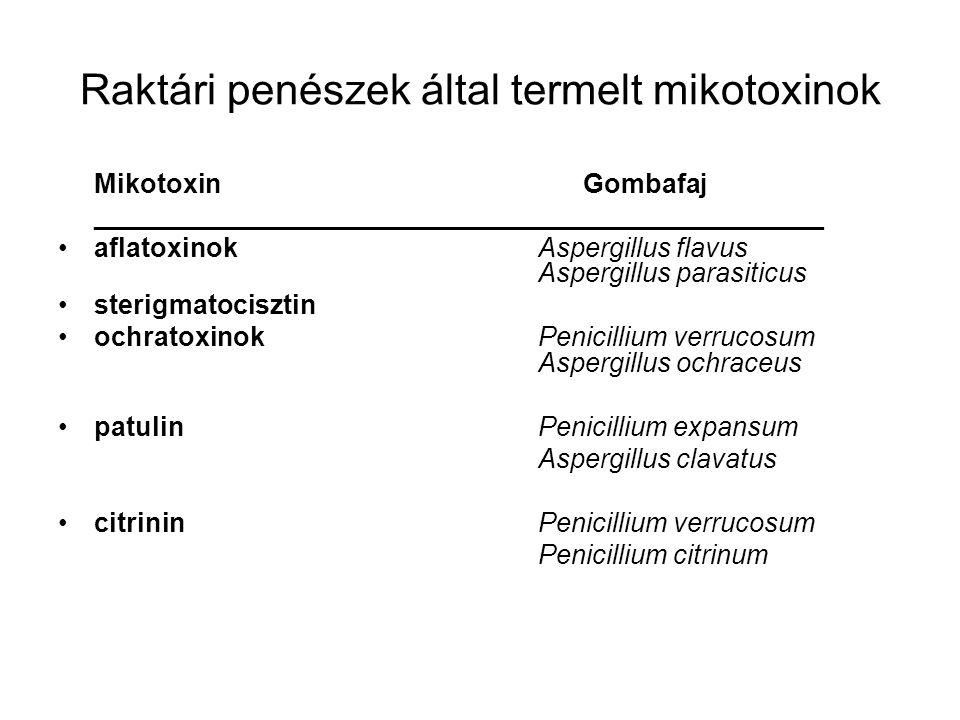 Raktári penészek által termelt mikotoxinok Mikotoxin Gombafaj _________________________________________________ aflatoxinok Aspergillus flavus Aspergi