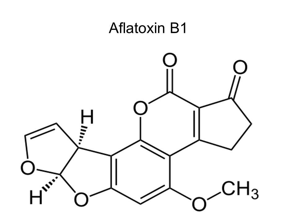 """T-2 toxin -""""A típusú trichotecének közül az egyik legmérgezőbb, a rRNS-hez kötődve képes a fehérjebioszintézis gátlására -Hűvös, csapadékos időben termelődik, minden gabonán és talajában előfordulhat -Állatoknál étvágytalanság, nyálkahártya irritáció, leromlás, vérképzési zavarok -Embernél súlyos esetben """"alimentáris toxikus aleukia - ATA (idegrendszeri tünetek, vérképző szervek károsodása)"""