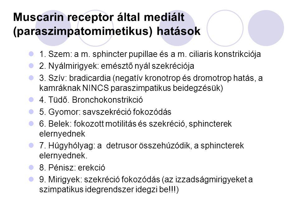 Muscarin receptor által mediált (paraszimpatomimetikus) hatások 1.