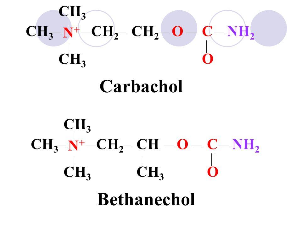 N+N+ NH 2 CH 3 CH 2 OC O Carbachol N+N+ CH 3 NH 2 CH 3 CHCH 2 OC O Bethanechol CH 3