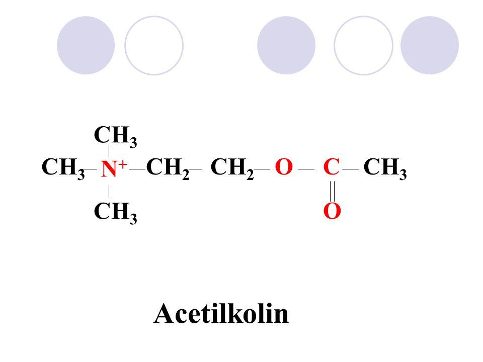 Főbb kolinerg transzmissziós helyek és kolinerg receptorok 1.