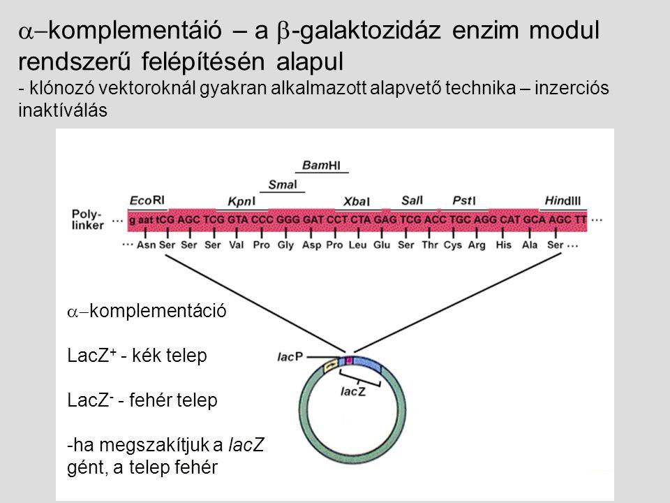  komplementáció LacZ + - kék telep LacZ - - fehér telep -ha megszakítjuk a lacZ gént, a telep fehér  komplementáió – a  -galaktozidáz enzim modul rendszerű felépítésén alapul - klónozó vektoroknál gyakran alkalmazott alapvető technika – inzerciós inaktíválás