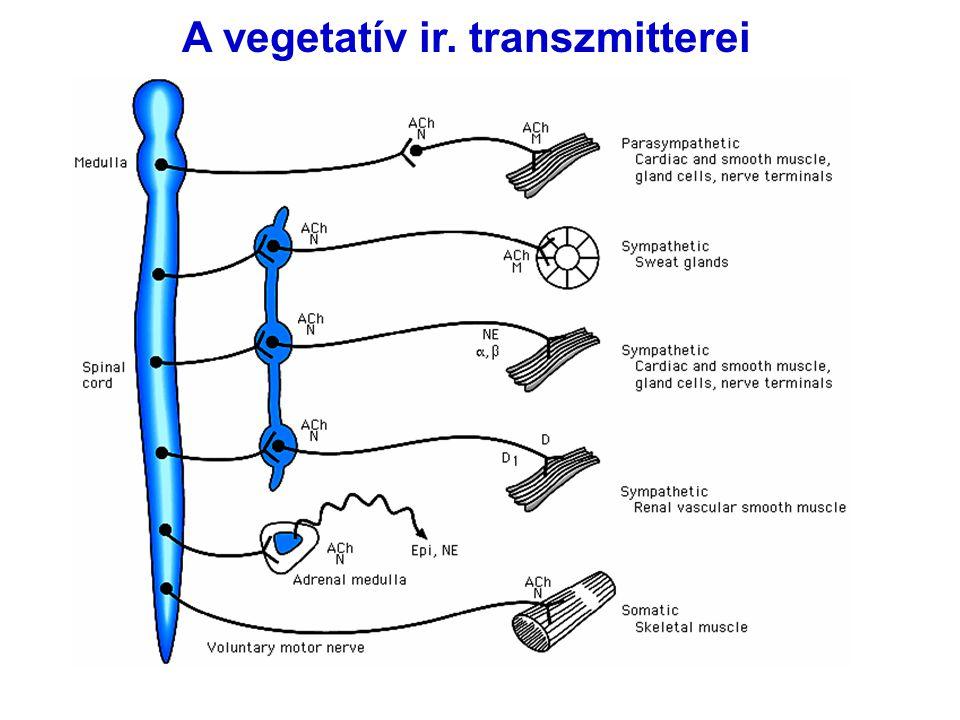 A vegetatív ir. transzmitterei