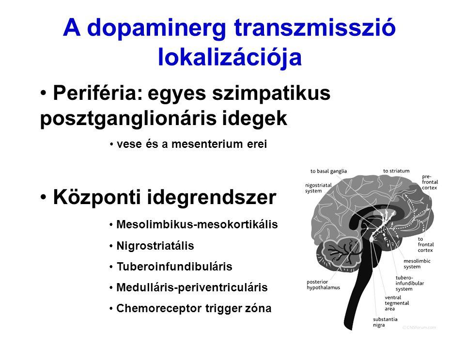 A dopaminerg transzmisszió lokalizációja Periféria: egyes szimpatikus posztganglionáris idegek vese és a mesenterium erei Központi idegrendszer Mesoli