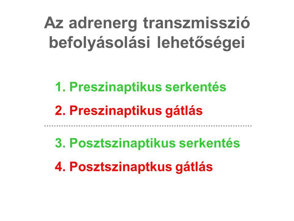 Az adrenerg transzmisszió befolyásolási lehetőségei 1. Preszinaptikus serkentés 2. Preszinaptikus gátlás 3. Posztszinaptikus serkentés 4. Posztszinapt