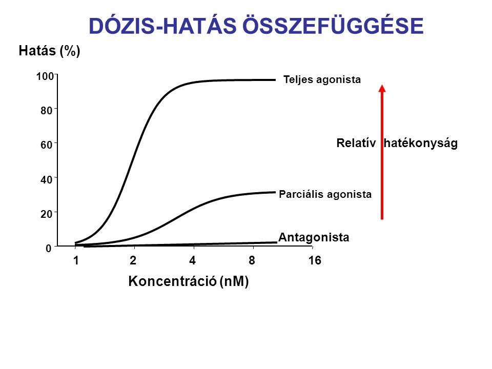 Teljes agonista Koncentráció (nM) 124816 0 20 40 60 80 100 Hatás (%) Parciális agonista Relatív hatékonyság Antagonista DÓZIS-HATÁS ÖSSZEFÜGGÉSE